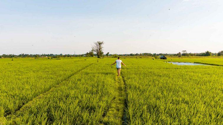 Rice terrace in Ubud Bali