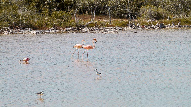Flamingos, Las Coloradas, Mexico