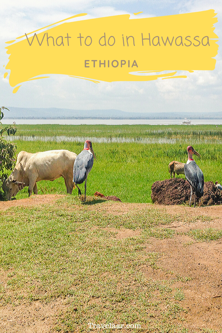 Birds and cows in Hawassa, Ethiopia