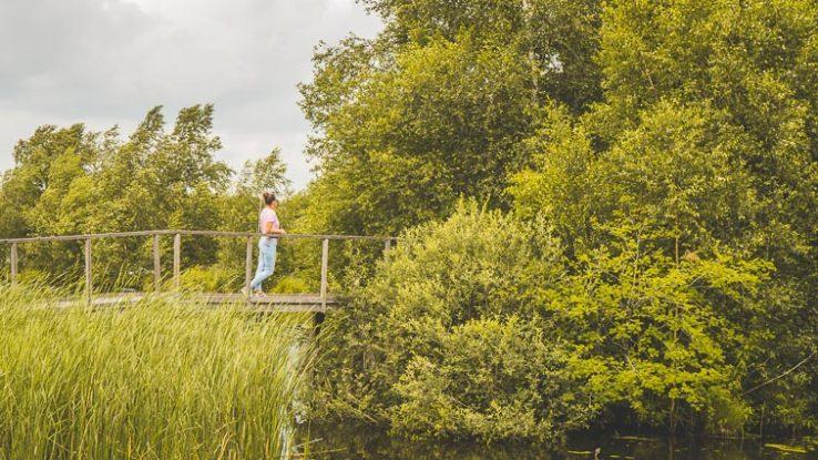 Nature reserve De Deelen Friesland